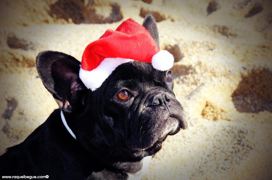 navidad-mascota-regalo