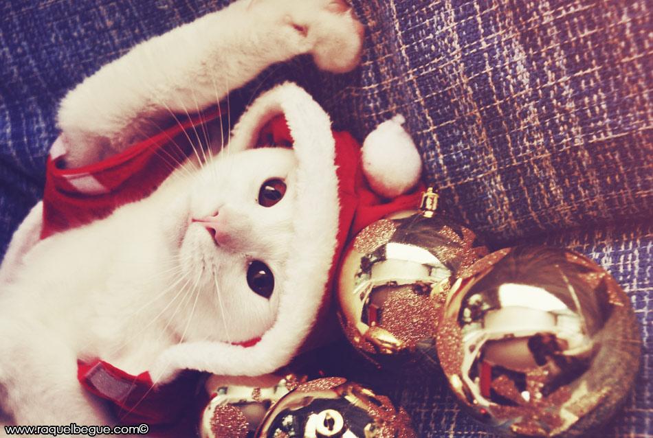 regalo-gato-navidad