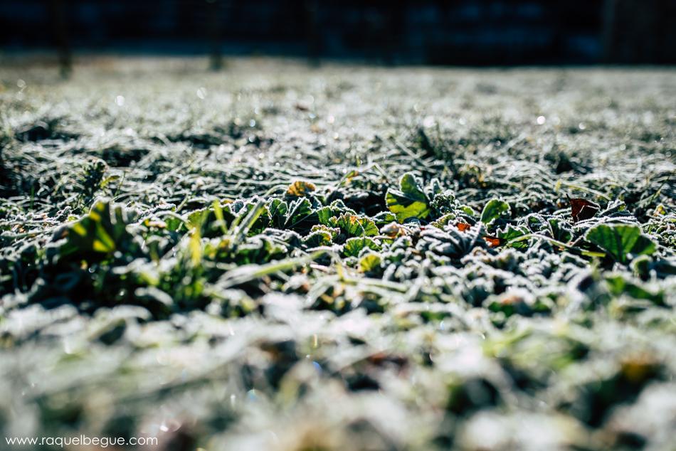 Vielha nieve