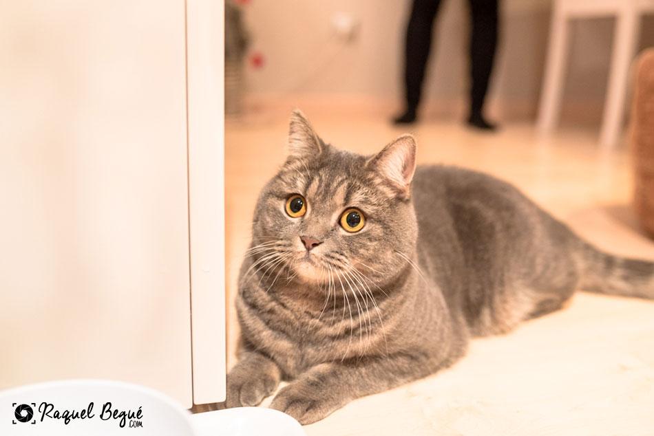 book-gato