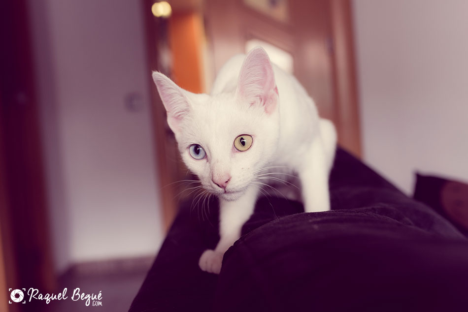 gato-sesion-fotos