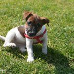 Sesión fotos perro | Leia