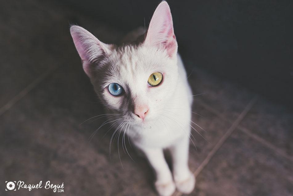 sesion-animales-gato