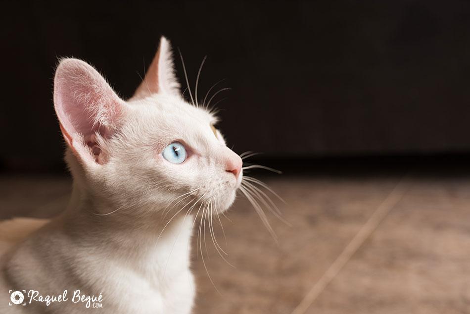 sesion-animales-gatos