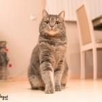 Sesión de fotos gato | Sonic