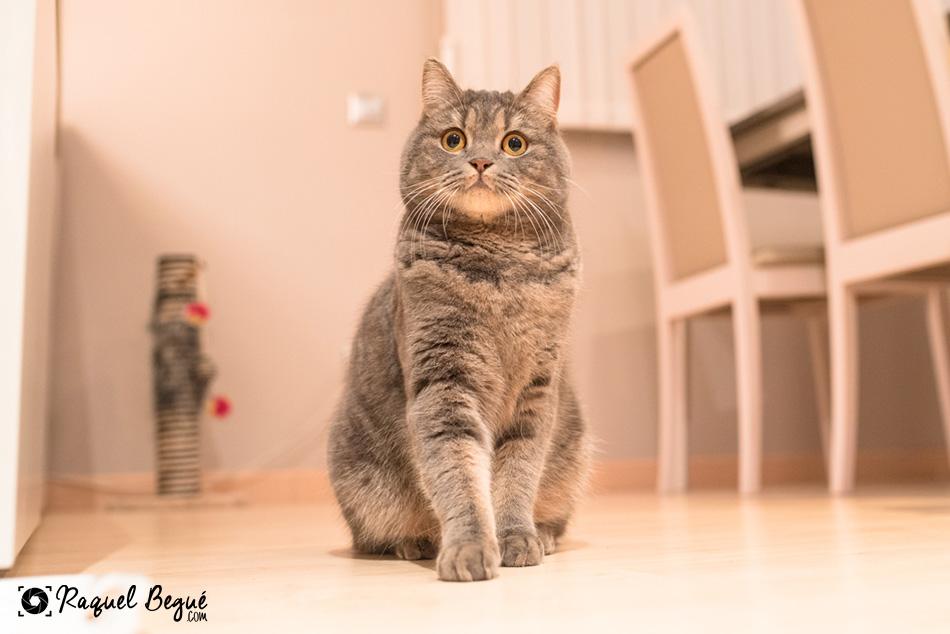 sesion-gato