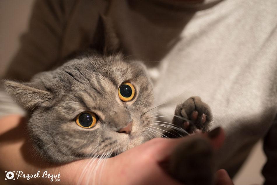 sesion-gatos-bcn