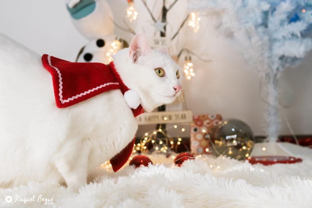 Navidad gatuna
