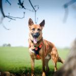 Sesión fotos perro – Jake