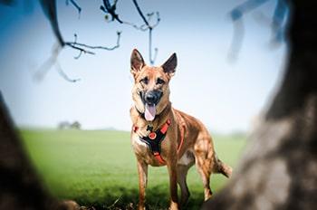 Sesión fotos perro | Jake
