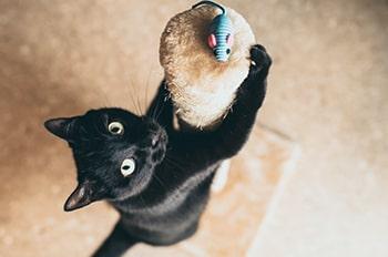 Book animales | Mambo
